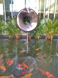 Fish pond at hotel in Khonkaen, Thailand. Beautiful colour fishes at the pond in hotel of Khonkaen royalty free stock photo