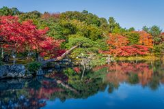 Beautiful colour leaves and reflection in the pond at Tenryuji temple. Beautiful colour leaves and reflection in the pond at Tenryuji temple, Arashiyama, Kyoto Royalty Free Stock Photography