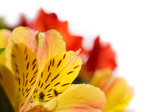 Beautiful Coloured Flowers on the White Background Royalty Free Stock Photos