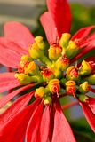 Buds and petals royalty free stock photos