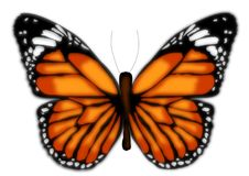 Butterfly isolated illustration. Beautiful colourful butterfly isolated illustration vector illustration