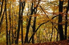 Beautiful colourful Forest in autumn, landscape. Die Schönheit des Waldes an einem schönen Herbsttag, Landschaft royalty free stock image