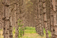 Beautiful and colourful forest field Stock Images