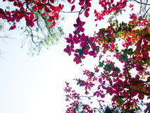 Autumn leaves background Royalty Free Stock Photo
