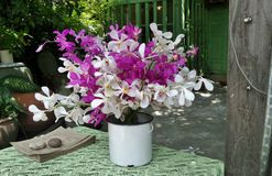 Beautiful colourful orchid in white vase on green table Royalty Free Stock Photo