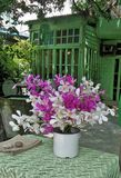 Beautiful colourful orchid in white vase on green table Royalty Free Stock Photos