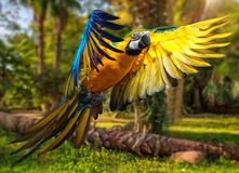 Beautiful colourful parrot. Over tropical background Stock Image