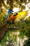 Beautiful colourful parrot Stock Photography