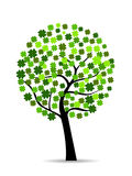 A beautiful colover tree on white isolted Royalty Free Stock Photo