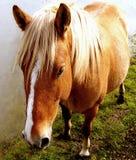 Beautiful colt Stock Photos
