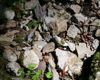 Stones and Small Plants in a Hole of a Bigger Rock. Beautiful combo of green leafy plants and different sized grey stones photographed in a forest in Japan stock photo
