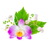 Beautiful composition of dendrobium, begonia flower and hibiscus stock photos