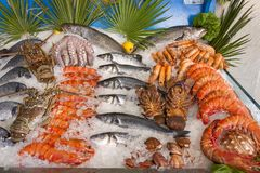 Seafood on ice. A beautiful composition of fish and fresh seafood with lemon on ice Stock Images