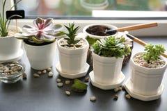 Beautiful composition of houseplants. On windowsill stock images
