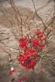 Beautiful composition with red Rowan berries and dry branches. Autumn wedding decoration stock photography