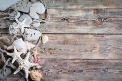Beautiful composition of seashells Royalty Free Stock Photos