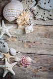 Beautiful composition of seashells Stock Photos