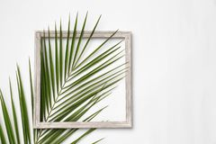 Beautiful composition with tropical leaf. On light background, top view stock photography
