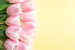 Beautiful composition with tulips for Mother`s Day. On color background Stock Images