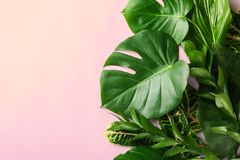 Beautiful composition with variety of exotic fresh plants on pink background. Top view stock image