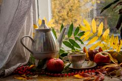 Beautiful composition of wet leaves of Rowan and fresh apples stock photography