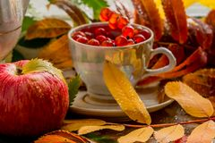 Beautiful composition of wet leaves of Rowan and fresh apples stock images