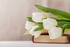 Beautiful composition with white tulips and old books on a beige blurred background in the morning light. Spring reading royalty free stock photos