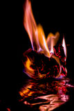 Beautiful concept flames. Fire on burns paper with black background. Soft Focus royalty free stock image