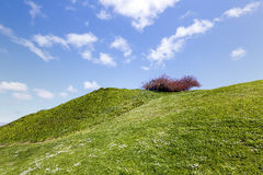 Beautiful contrast landscape green grass blue sky Stock Image