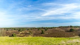 Beautiful contrast on a sunny day of a green grass with an arid terrain. With a wonderful blue sky and white clouds in Brunssummerheide in South Limburg in the royalty free stock images
