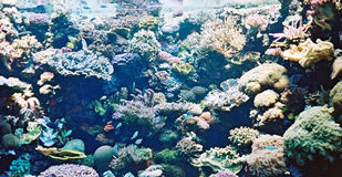Beautiful Coral. Underwater scene Stock Photo