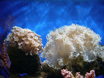 Beautiful coral Royalty Free Stock Images
