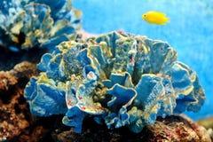 Beautiful Coral Royalty Free Stock Photos