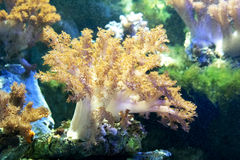 Beautiful coral Stock Images