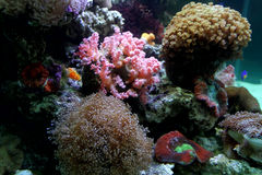 Beautiful coral and coral fish Stock Photo