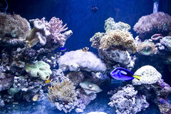 Beautiful coral and coral fish Stock Photography
