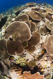 Beautiful coral garden Stock Photos