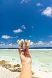 Beautiful coral in hand Royalty Free Stock Images