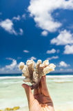 Beautiful coral in hand Royalty Free Stock Photo