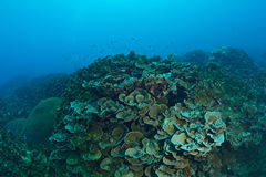 Beautiful Coral in Koh Tao, Thailand Royalty Free Stock Photos