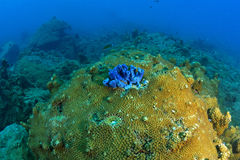 Beautiful Coral in Koh Tao, Thailand Stock Photography