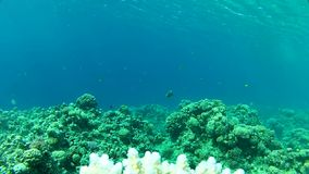 Beautiful coral in Red sea. Red sea Underwater life fish on the bottom. The corals and the caves. Corals. Fish and clear water. Tropical sea stock video footage