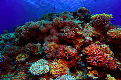 Beautiful Coral Reef Stock Image