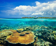 Beautiful Coral reef on background Gili Meno Island Stock Images