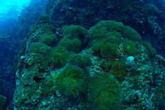 Beautiful coral Reef in Chumporn national park, Thailand Stock Photos