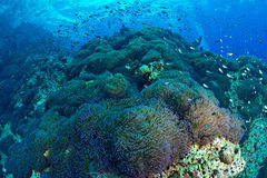 Beautiful coral Reef in Chumporn national park, Thailand Stock Images