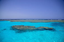 Beautiful coral reef in Egypt Royalty Free Stock Photos