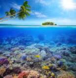 Beautiful Coral reef Royalty Free Stock Photos
