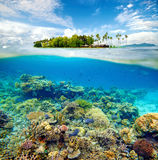 Beautiful Coral reef Stock Images