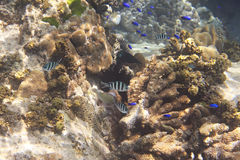 Beautiful coral reef with fish. Indian Ocean near Stock Photo